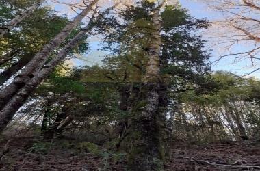 Palguin Bajo, Araucanía 4920000, ,Parcela,Venta,1111
